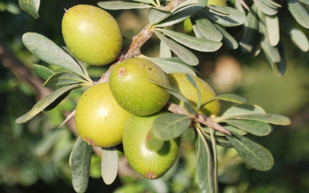 L'huile d'argan biologique désodorisé certifié et pur à 100%