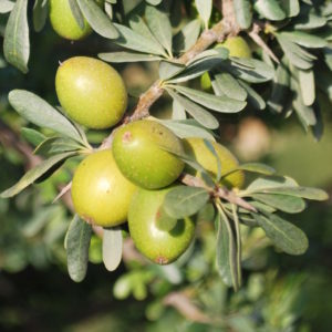 Deodorized argan oil - argan oil deodorized زيت الأركان