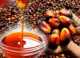 Moroccan palm oil