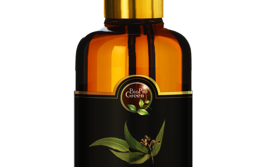 Moroccan eucalyptus oil and essential organic oil