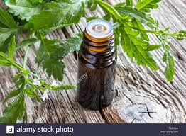 Vervain oil organic