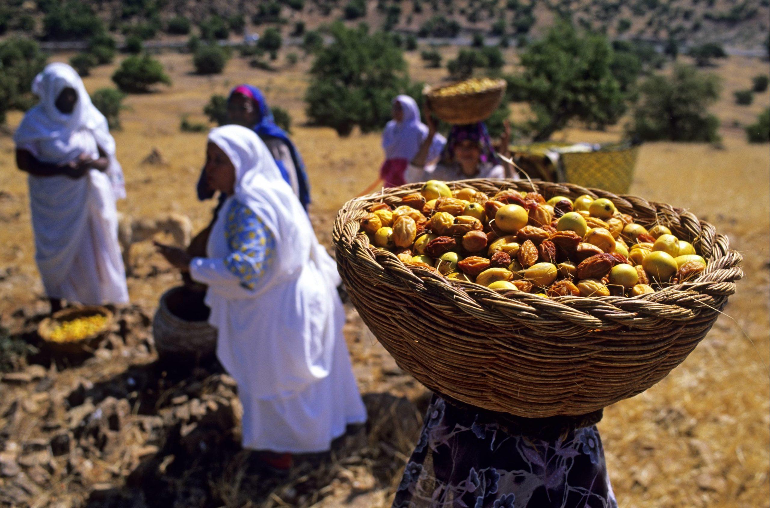 Moroccan Culinary